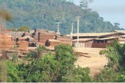 Operação combate extração ilegal de madeira na Terra Indígena mais desmatada do Brasil
